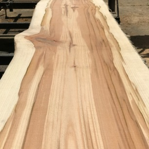 Freshly cut maple