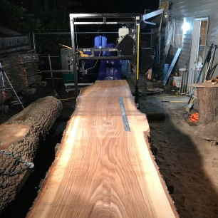 Massive white oak slab - 4' ruler for scale